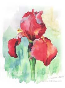 Заказать акварельный рисунок цветов