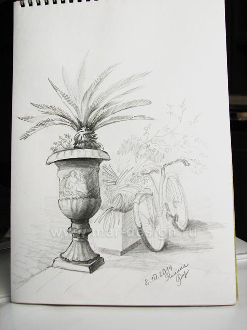 Карандашный рисунок велосипеда. Пальма в кадке.