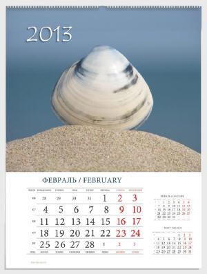 ракушка на песке на фоне моря