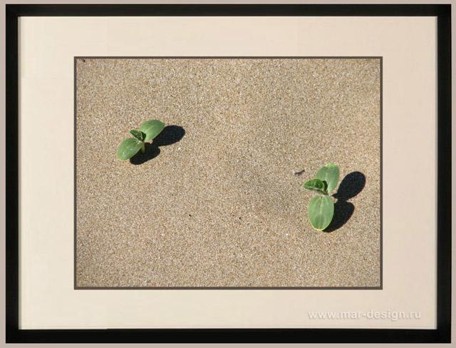 Фотография в интерьере, ростки гороха на песке