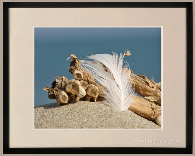 Фотография в интерьере, перышко и тростник на фоне моря
