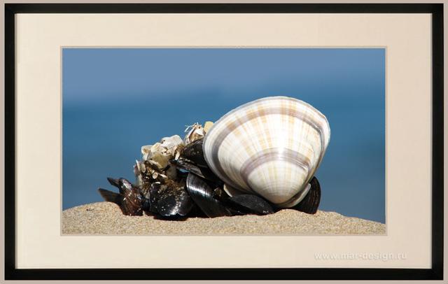 Фотография в рамке, ракушка на песчаном берегу.